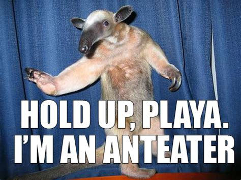 Anteater Meme - chill the fuck out brain welcome aboard the good multi