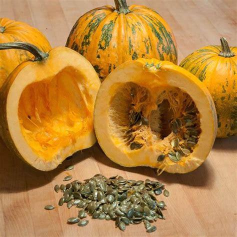 pumpkin styrian hulless pumpkin australian seed