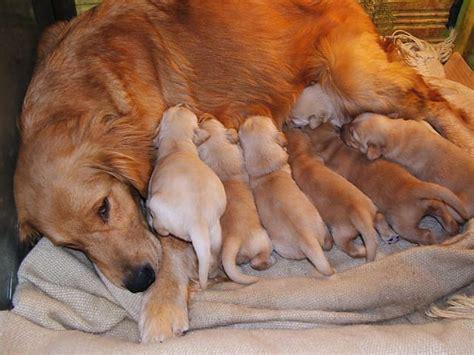 perros todas clases imagenes de perros cachorros de todas las razas imagui