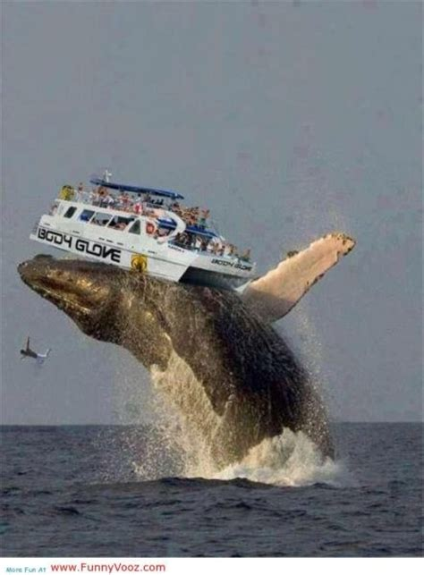 giants boat picture nice whale fish playing game funny fishing photos