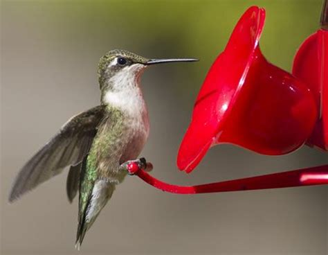 ontario hummingbird festival at wye marsh on july 12 2013