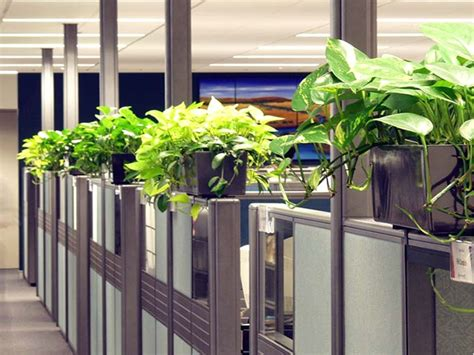 plant partition indoor office plants hire melbourne inscape indoor