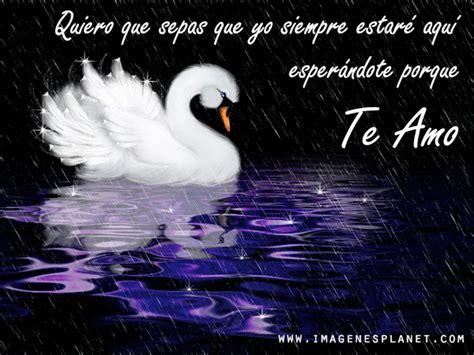 imagenes positivas de lluvia imagenes de cisnes en lluvia con frases de amor im 225 genes
