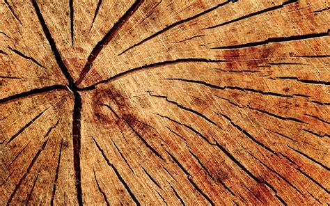 ils ont r 233 ussi 224 rendre du bois transparent maj