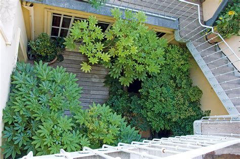 Horticulture Et Jardins by Terrasses Horticulture Et Jardins