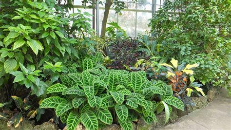 piante da giardino vendita on line vendita piante fiori per cerimonie piante