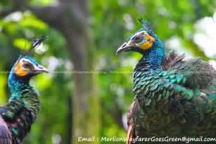 Plants From Tropical Rainforest - jurong bird park southeast asian birds aviary merlion wayfarer goes green