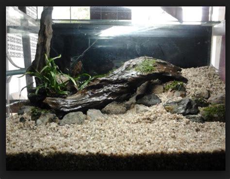 tips mudah cara membuat aquascape pada aquarium yang murah