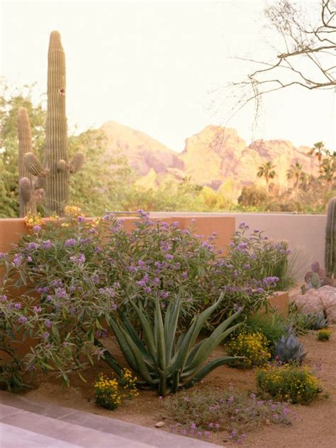 desert plants the ultimate survivors 78 images about palm springs style gardening in the