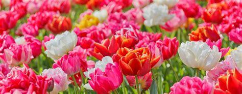 cattolica in fiore cattolica in fiore l esposizione floreale di maggio