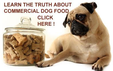 best food for pugs with allergies pugs and food basics
