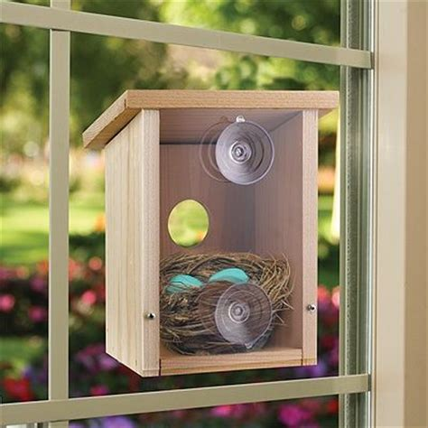 bird houses with viewing window window view bird houses and nests on pinterest