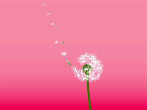 Qw Wallpaper Dandelion Pink dandelion vector