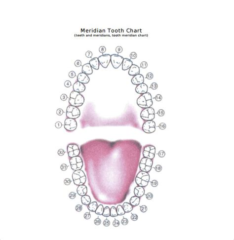 sample teeth chart templates   ms word