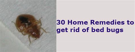 home remedies   rid  bed bugs   house