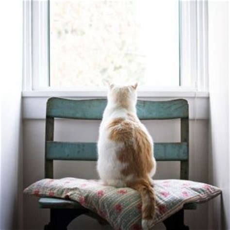 window cat seat cat care sheet a simple guide to cat parenthood