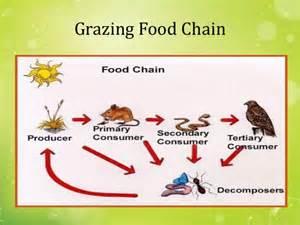 Backyard Food Chain Ecology Amp Ecosystems