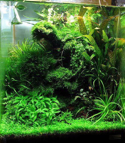 aquarium design usa 218 best images about aquariums and paludariums on