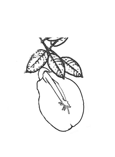 Flor de ceibo para colorear