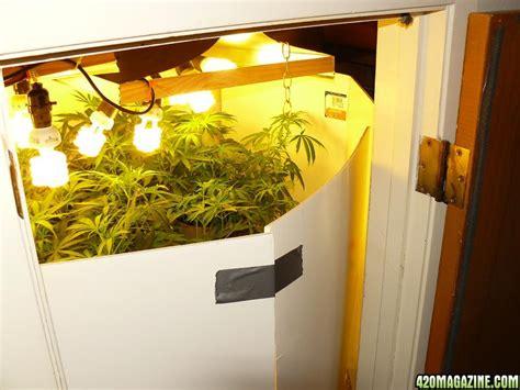 Cfl Grow Light Setup by Maximizing Indoor Grow Lighting Effeciency
