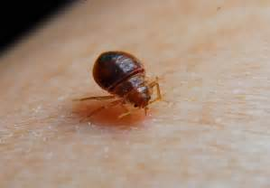 Heat Kills Bed Bugs Getting Rid Of Bed Bugs Naturally Front Yard Landscaping