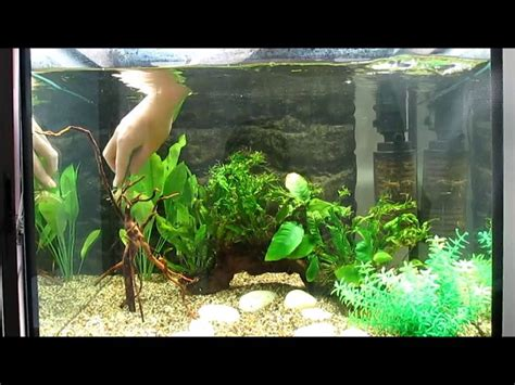 Aquarium Design Youtube | freshwater aquarium design youtube