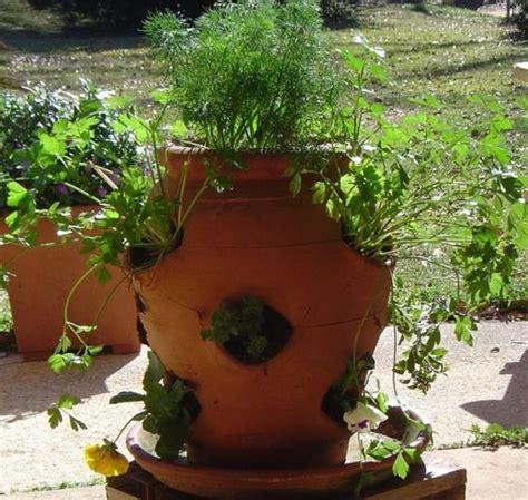 container herb gardens herb container garden