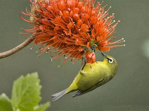 wallpaper flower bird beautiful nice and lovely birds images allfreshwallpaper