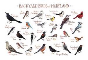 maryland backyard birds field guide print watercolor