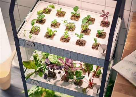 Fall Vegetable Garden - ikea releases indoor garden kits for year round veggies no skills or soil needed