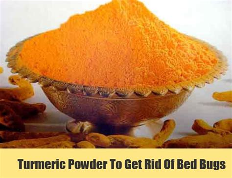 powder to kill bed bugs 5 bed bugs home remedies natural treatments cure
