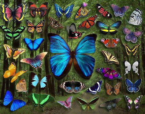 and butterfly butterflies images butterfly collage hd wallpaper and background photos 22494017