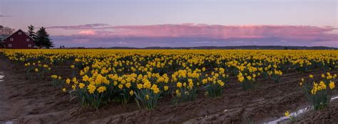 Skagit County Detox by Where S The Tulips Cool Messes With Skagit Valley