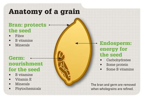 whole grains help you lose weight how barley flour can help you lose weight mirfak pty ltd