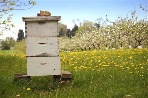 best bee hive a digital beehive could warn beekeepers when their hives