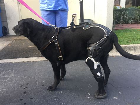 prosthetic leg for prosthetic leg gives injured new leash on sun sentinel