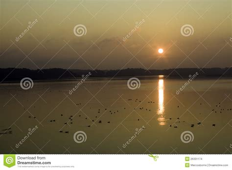 bird reserve by sunrise stock images image 26331174