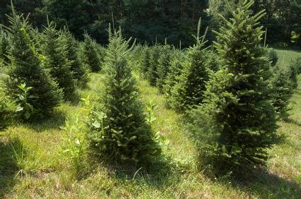 artificial vs organic christmas trees lovetoknow