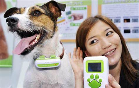 dogs that talk talking collars
