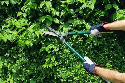 Quanto Costa Un Giardiniere by Quanto Costa La Potatura Delle Siepi E A Chi Rivolgersi