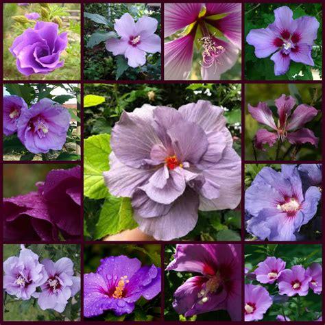 purple flowers types of purple flowers names of purple