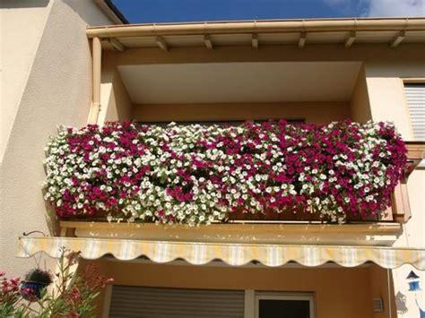 petunien pflanzen ab wann mein petunien balkon mein sch 246 ner garten forum