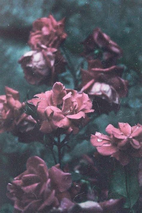 theme rose iphone iphone wallpapers tumblr iphone pinterest heart