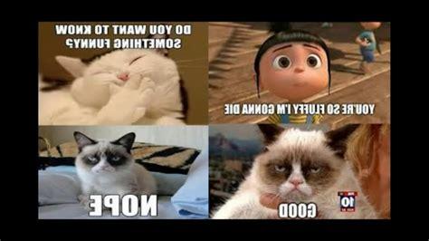 Cat Memes 2018 - 2018 grumpy funniest grumpy cat memes ever pt 1 youtube photos related to stunning grumpy
