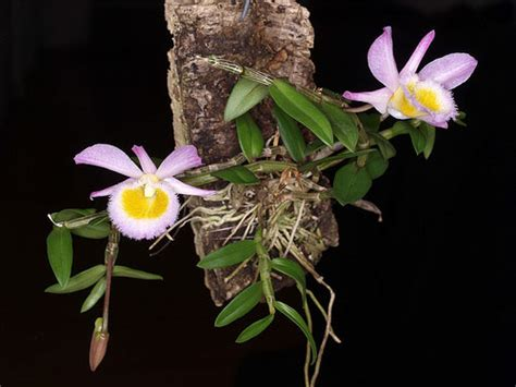 mounting orchids