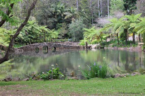 Tamborine Mountain Botanical Gardens In My Backyard Tamborine Mountain