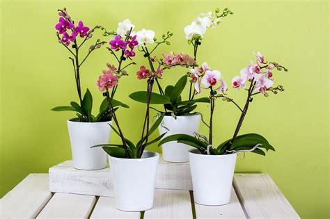 cuidados de las plantas de interior cuidados generales de las plantas de interior plantas de
