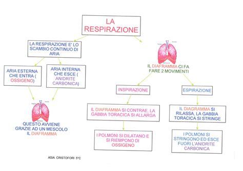 respirazione interna ed esterna mappa scienze respirazione dislessia discalculia