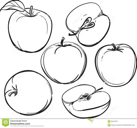 doodle line drawing apple line drawing of apples on a white background one