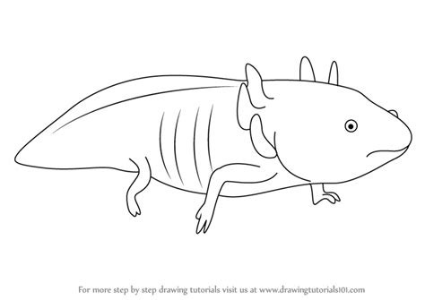 Axolotl Coloring Page by Learn How To Draw A Axolotl Hibians Step By Step